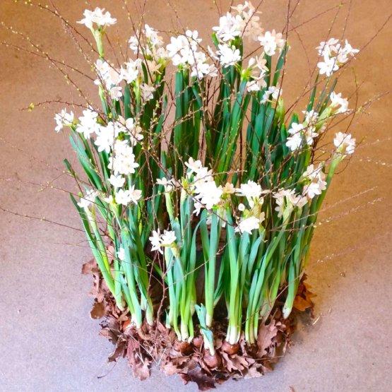 Narciss begravningskrans