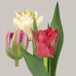 Tulpaner i allahjäftansdagbukett
